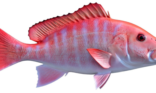 TPWD Extends Red Snapper Season in Federal Waters