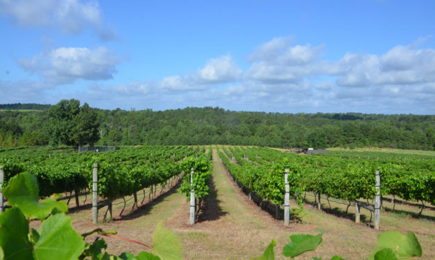 Texas vineyards poised for banner year