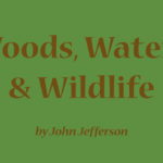 Woods, Waters, & Wildlife: A 'Cool' Catch